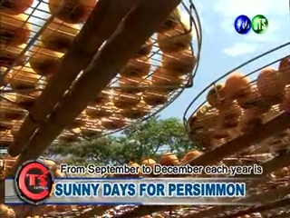 Sunny Days for Persimmon