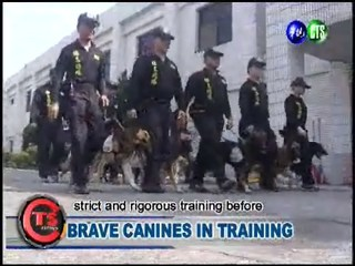 Brave Canines in Training