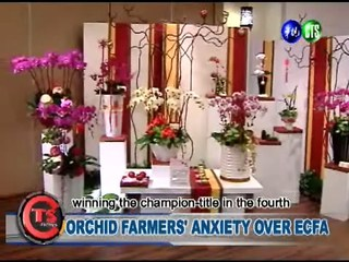Orchid Farmers' Anxiety Over Ecfa