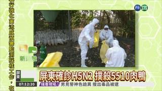 屏東確診H5N2 撲殺5510肉鴨