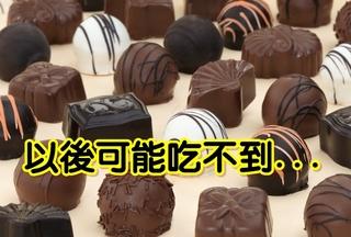 受全球暖化影響 巧克力未來恐吃不到