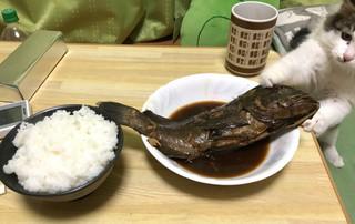 拿來! 晚餐剛上桌 貓老大秒搶走主菜