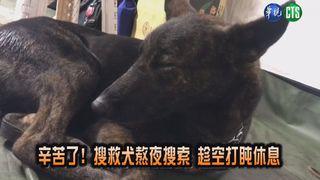 【影】辛苦了! 搜救犬熬夜搜索 趁空打盹休息