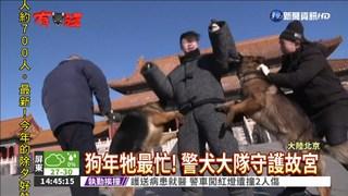 北京故宮23隻警犬 過年不放假