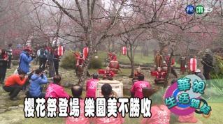 櫻花祭登場 樂園美不勝收