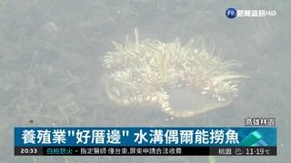 海葵.羽毛蕨藻也有! 居民嘖嘖稱奇