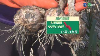 【午間搶先報】蒜頭價格暴跌 農民控政府放任進口