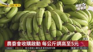 """香蕉價格""""崩盤"""" 成堆香蕉拿去當肥料"""