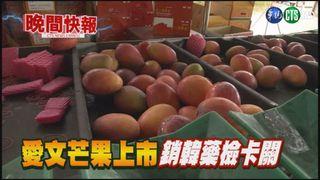 【晚間搶先報】愛文芒果上市 銷韓藥檢仍有爭議