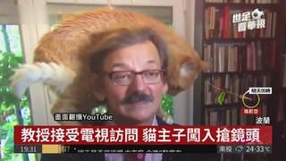 波蘭教授受訪 貓主子闖入搶鏡頭