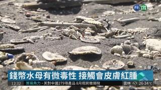 錢幣水母綿延3km 外澳海灘戲水小心!