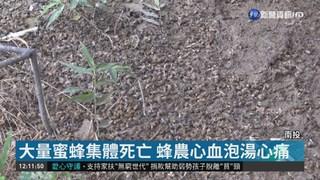 """""""芬普尼""""惹禍! 南投逾千萬隻蜜蜂慘死"""
