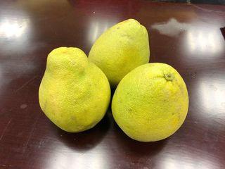 文旦滯銷逾百萬斤 柚農無奈免費送