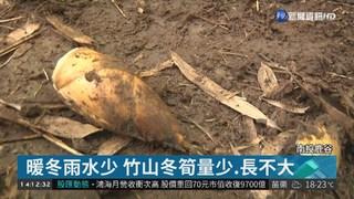 冬筍產量銳減5成 拍賣價飆1斤320元