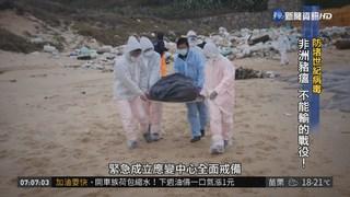 台灣防堵非洲豬瘟 不能輸的戰役!