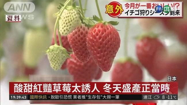 日本草莓季來臨! 品嘗當季酸甜美味 | 華視新聞