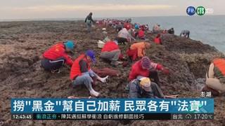 """紫菜量少價高! 澎湖民眾瘋""""撈黑金"""""""