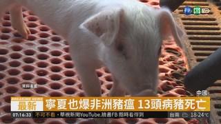 中國非洲豬瘟疫情延燒 寧夏也淪陷