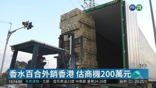 台中三萬枝香水百合 裝櫃外銷香港