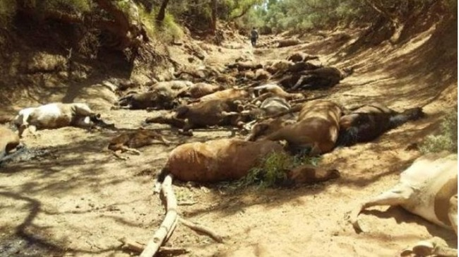 太熱了! 澳洲90人猝死 40匹馬渴死 | 華視新聞
