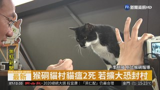 猴硐貓村貓瘟2死 若擴大恐封村
