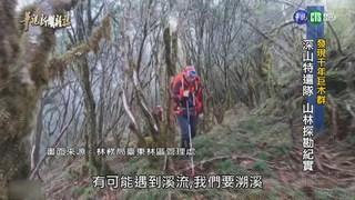 【華視新聞雜誌】發現千年巨木群 深山特遣隊山林探勘紀實