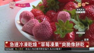 """大湖草莓新吃法 """"凍果""""口感像餅乾"""