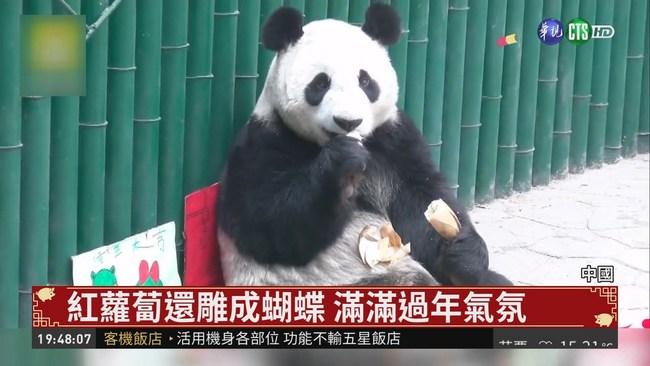 竹子.蘋果.紅蘿蔔 貓熊年夜飯上桌囉! | 華視新聞