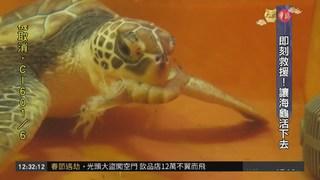 海洋生態悲歌 海龜誤食垃圾身亡