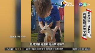 前進澳洲 揭開袋鼠.無尾熊身世之謎