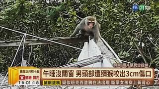 【台語新聞】潑猴闖民宅咬人 男頭部遭啃縫逾10針