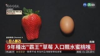 """比雞蛋還大 """"霸王""""草莓有水蜜桃香"""