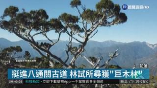 """空拍原始""""巨木森林"""" 看見台灣最高樹!"""