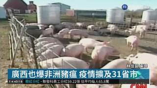 中國非洲豬瘟疫情擴散 廣西也淪陷