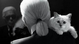時尚老佛爺辭世 外傳62億遺產全給「貓」