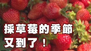 【放4大吃】WOW!草莓控必看
