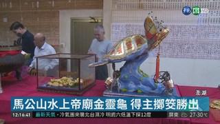 澎湖黃金龜王市價千萬 2人擲筊迎回