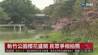 新竹公園野餐日 邀民眾賞櫻聽音樂