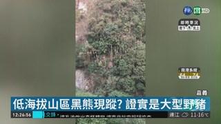 低海拔山區台灣黑熊現蹤? 山友瘋傳