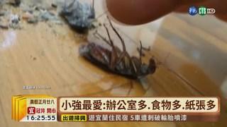【台語新聞】北部德國蟑螂頑強 對3殺蟲劑有抗藥性