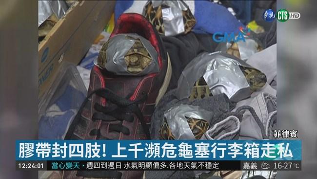 瀕危龜遭綑裝行李箱 棄置菲國機場 | 華視新聞