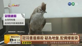 """【台語新聞】""""冠羽畫眉""""發狠咬踢 旁觀民眾來勸架"""