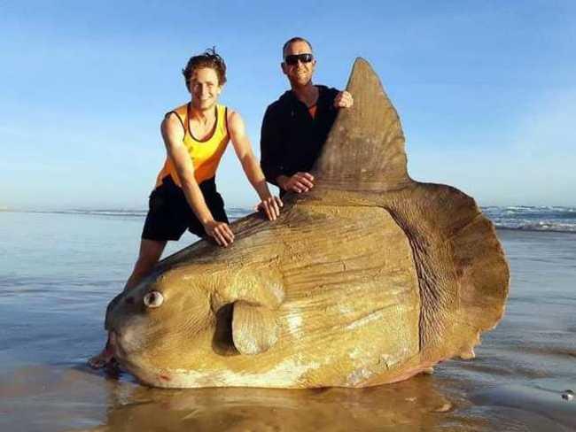 澳洲驚見沉船殘骸 不料竟是「牠」! | 華視新聞