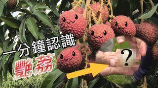 【放4大吃】一分鐘認識荔枝新品種-「艷荔」