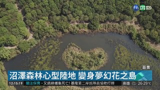 鯉魚潭水庫旁 沼澤森林打造花之島