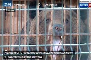 俄女好奇闖籠餵棕熊 左手遭啃斷得截肢保命