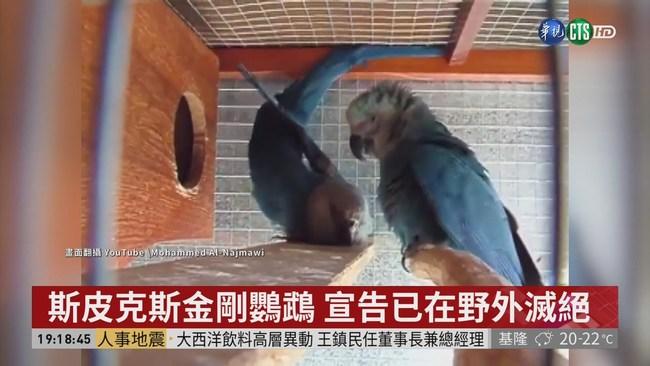 棲地被毀.獵捕屠殺 這些物種已滅絕! | 華視新聞