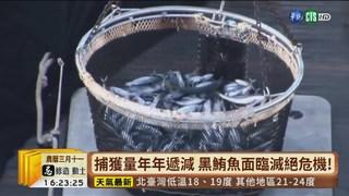 【台語新聞】捕撈貪食過度 黑鮪魚面臨生存浩劫!