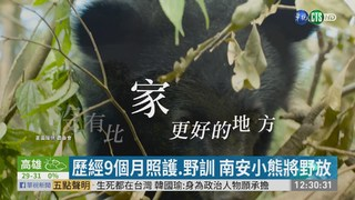 南安小熊增胖到40公斤 近期將野放