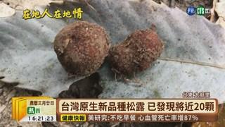 【台語新聞】世界新品種松露 現身太麻里試驗林區